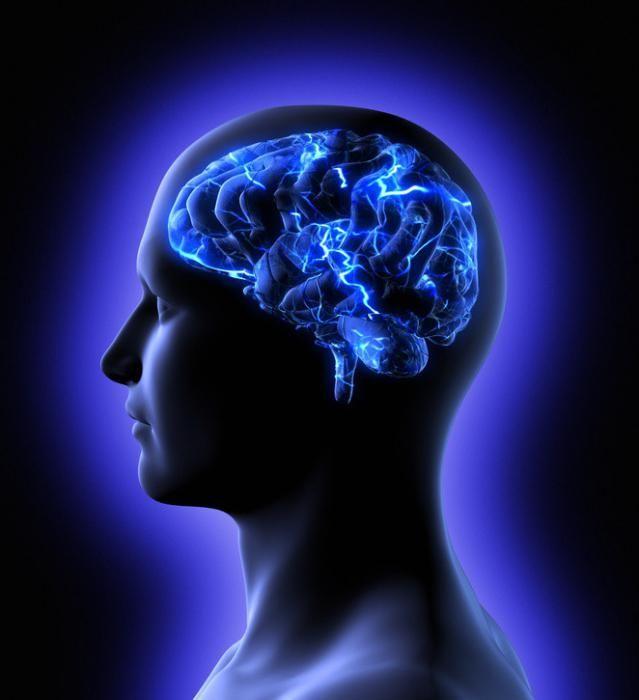 Закони та теорії пам`яті в психології