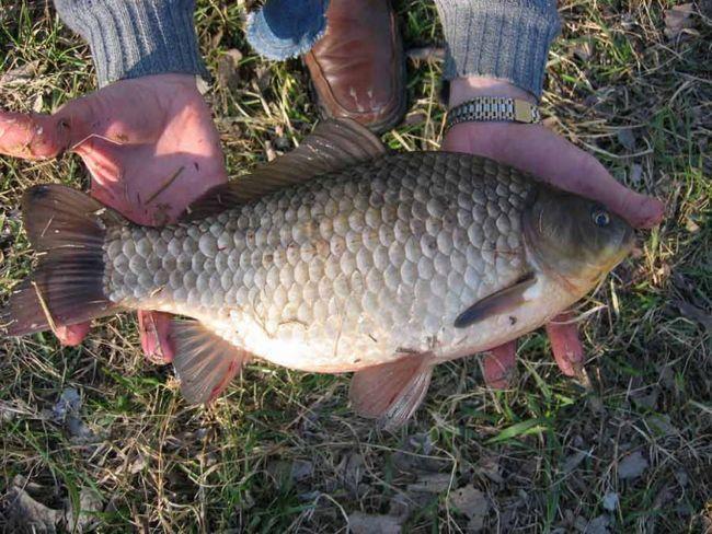 Як ловити рибу восени