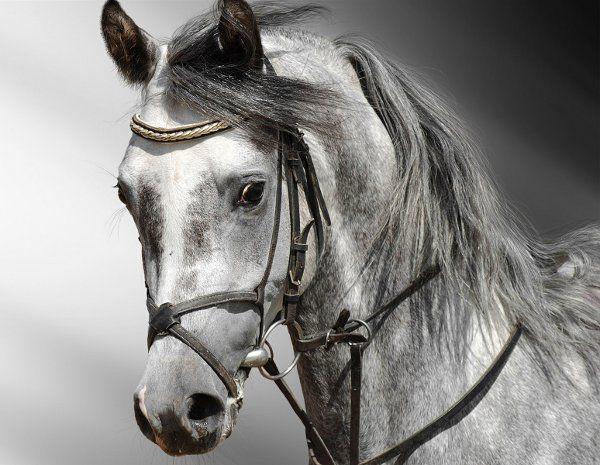 Як намалювати голову коня