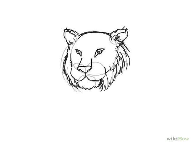 Зображення з назвою Draw a Tiger Step 7
