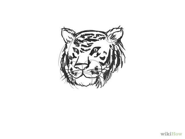 Зображення з назвою Draw a Tiger Step 8