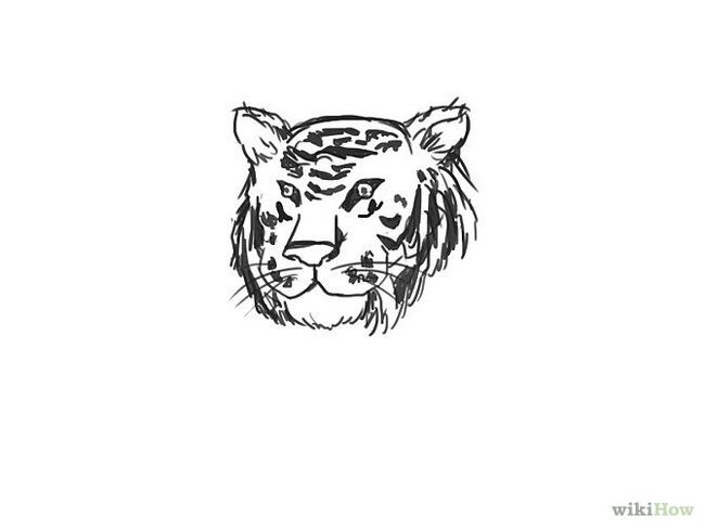 Зображення з назвою Draw a Tiger Step 9
