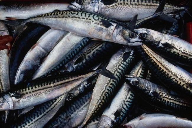 Як зробити рибу менш солоною