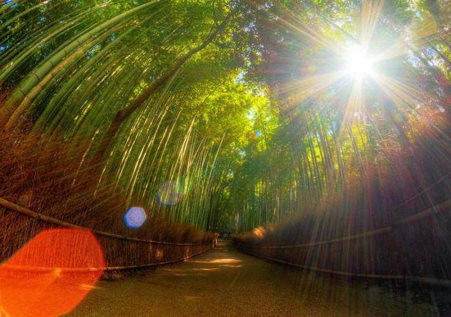 посуд з бамбука