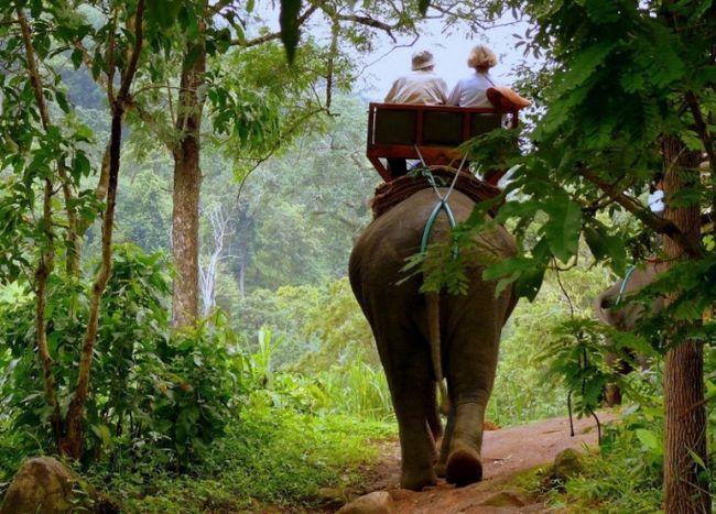 Як намалювати джунглі