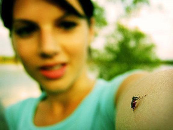 Засіб від комарів off clip-on: відгуки