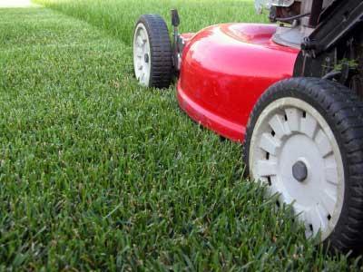 Стрижка газонів. Як правильно доглядати за живим килимом