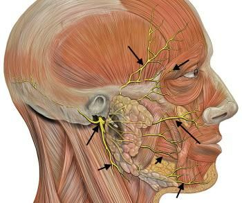 Трійчастий нерв: симптоми і лікування