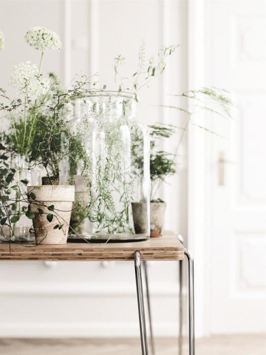 Жіноча магія, або кімнатні рослини для сімейного щастя