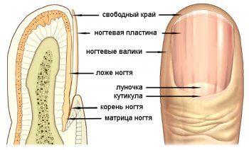 стрижка нігтів фото