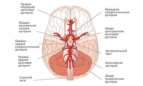 Як можна поліпшити відтік крові від голови?