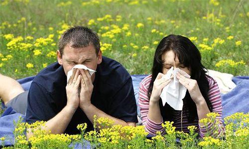 Ефективні народні засоби від алергії на цвітіння
