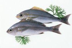 Нежирна риба для дієти