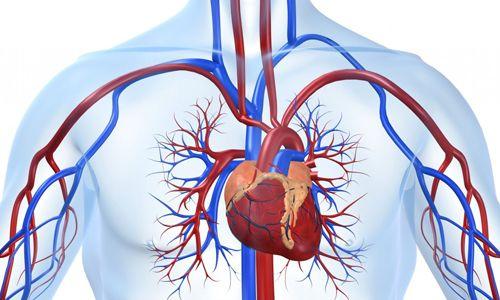 Різновиди ліків для серця і судин