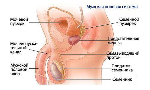 Вазектомія як ефективний спосіб контрацепції